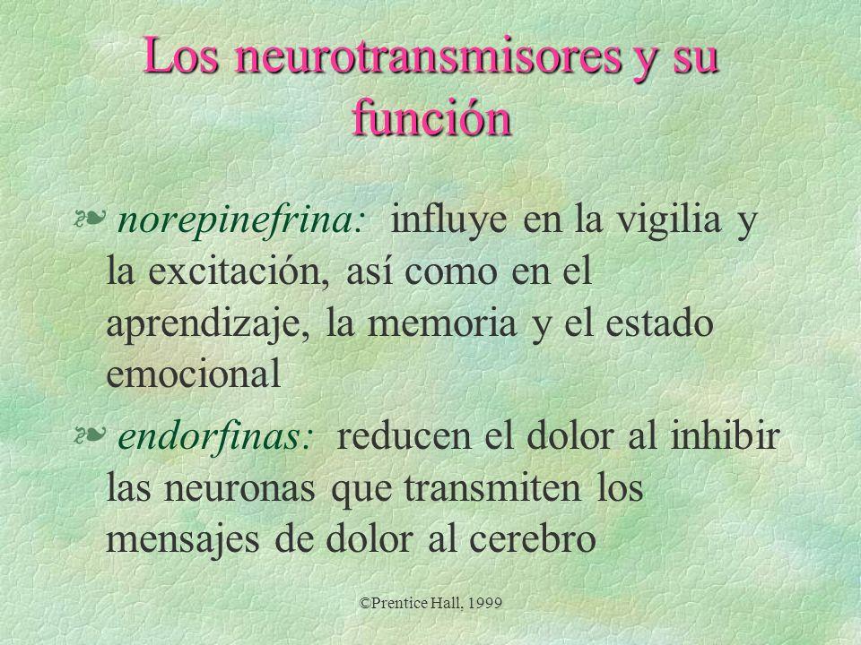 Los neurotransmisores y su función