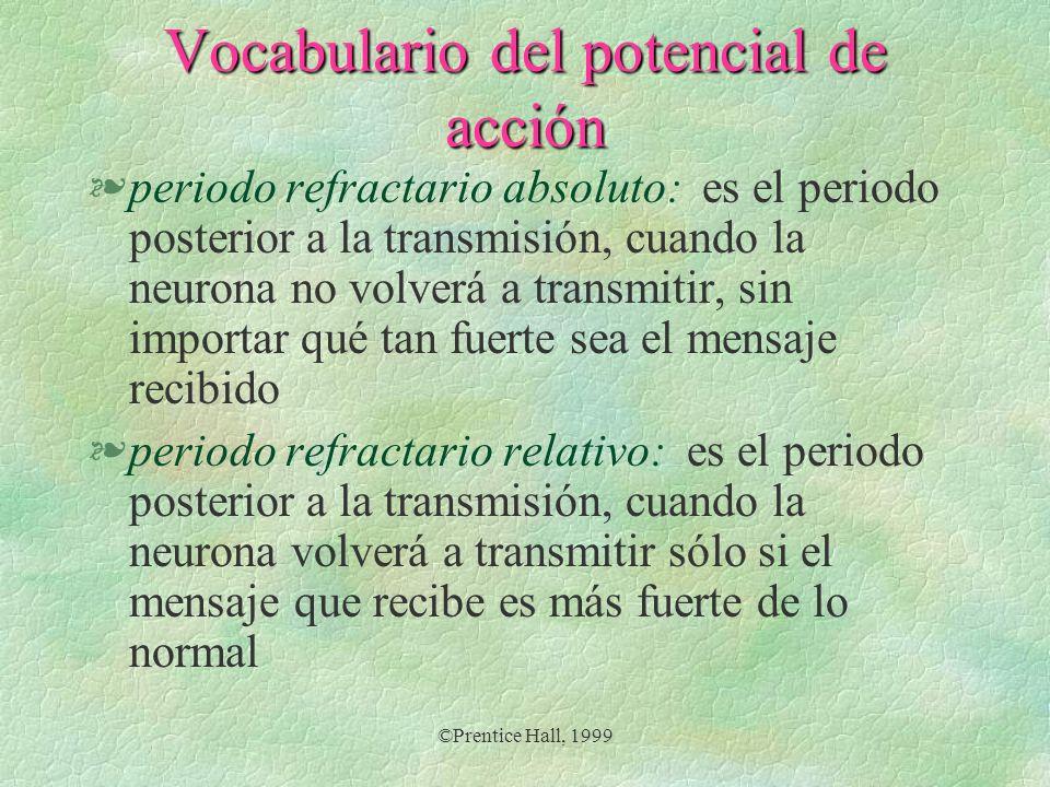 Vocabulario del potencial de acción