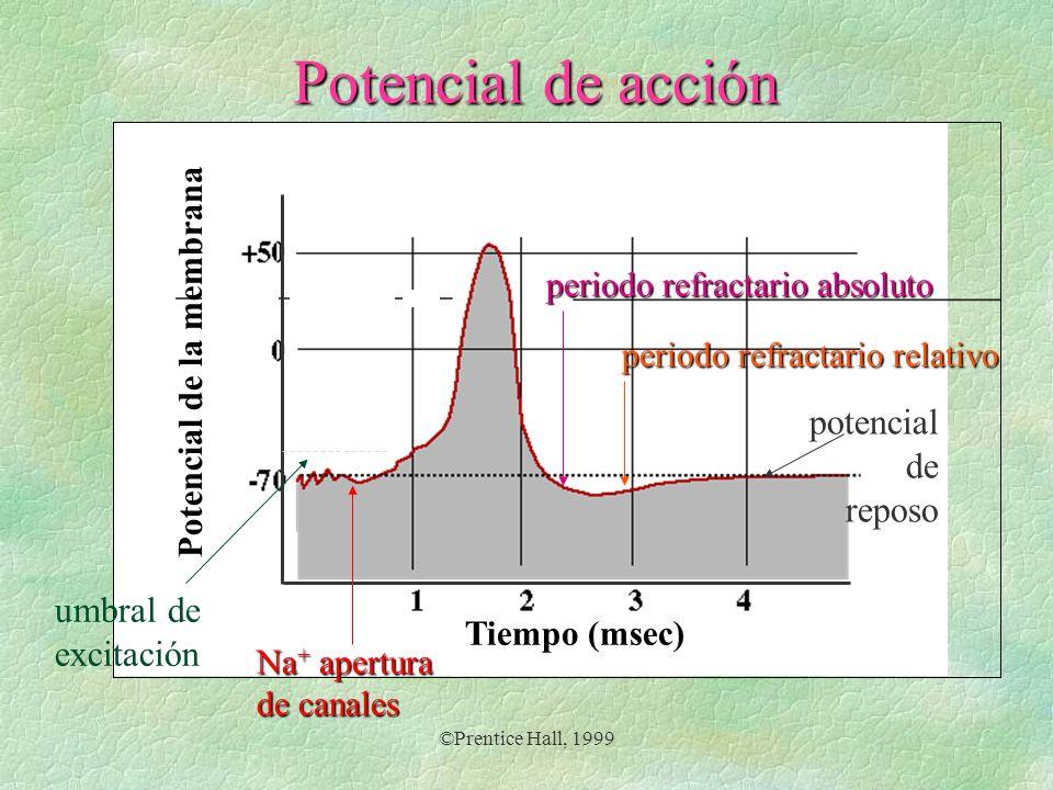 Potencial de acción potencial de reposo umbral de excitación