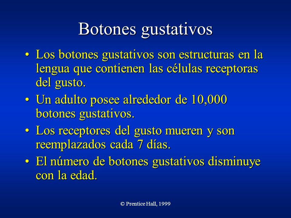 Botones gustativos Los botones gustativos son estructuras en la lengua que contienen las células receptoras del gusto.