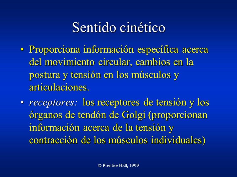 Sentido cinético Proporciona información específica acerca del movimiento circular, cambios en la postura y tensión en los músculos y articulaciones.