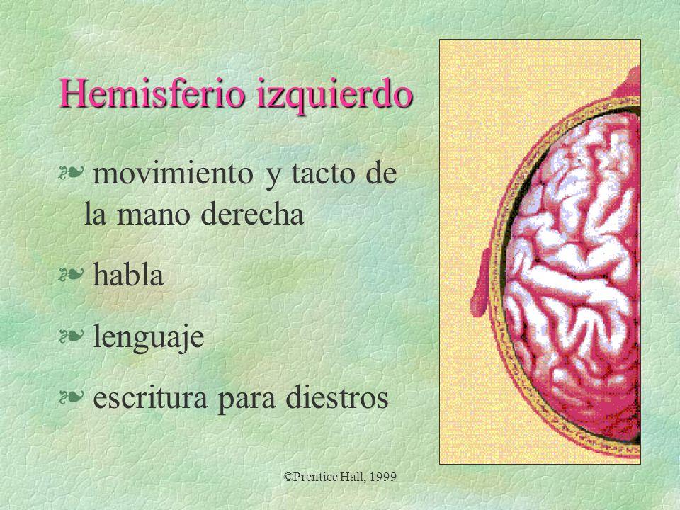 Hemisferio izquierdo movimiento y tacto de la mano derecha habla