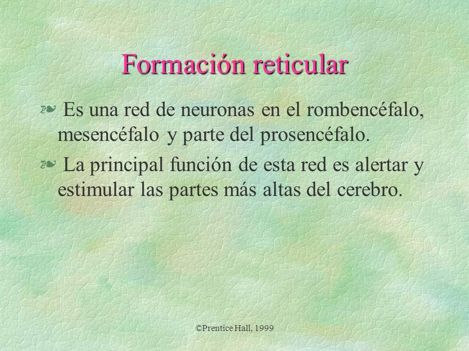 Formación reticularEs una red de neuronas en el rombencéfalo, mesencéfalo y parte del prosencéfalo.