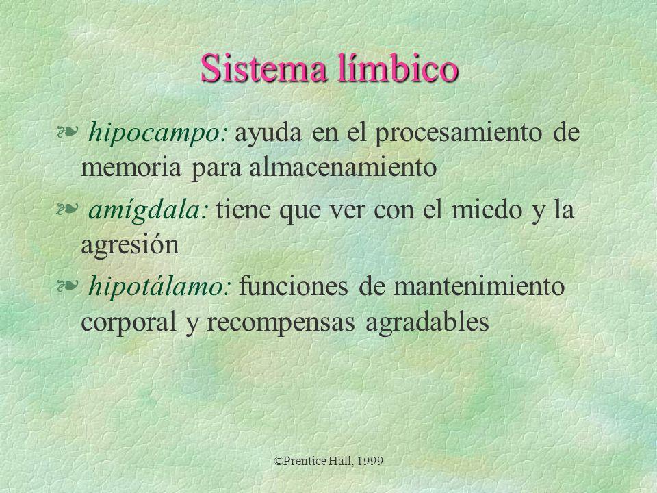 Sistema límbico hipocampo: ayuda en el procesamiento de memoria para almacenamiento. amígdala: tiene que ver con el miedo y la agresión.