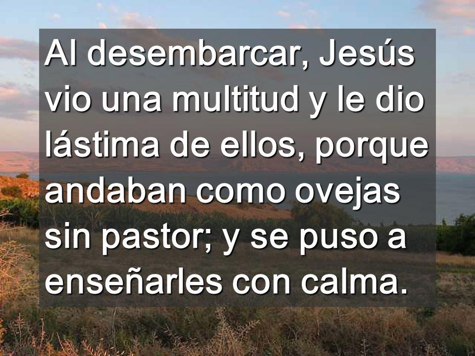 Al desembarcar, Jesús vio una multitud y le dio lástima de ellos, porque andaban como ovejas sin pastor; y se puso a enseñarles con calma.