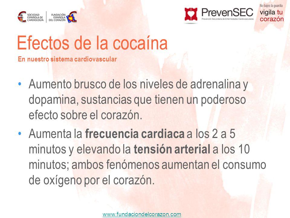 Efectos de la cocaínaEn nuestro sistema cardiovascular.