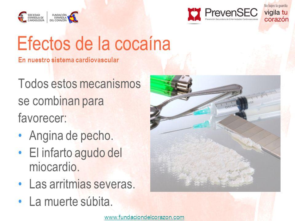 Efectos de la cocaína Todos estos mecanismos se combinan para