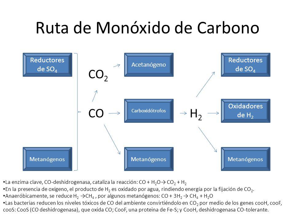 Ruta de Monóxido de Carbono