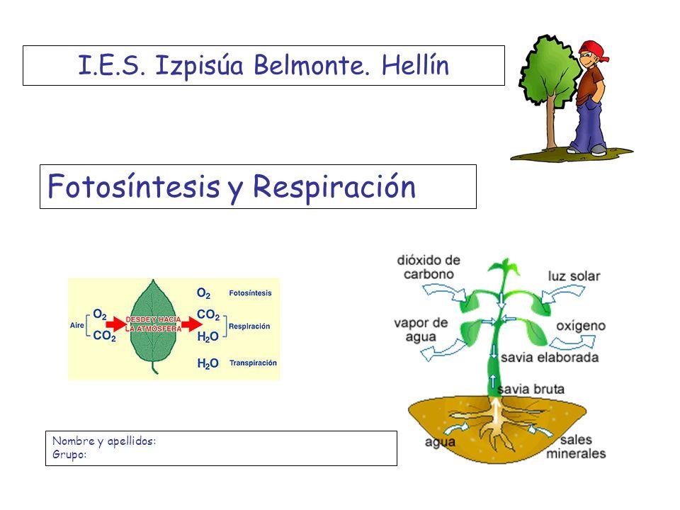 I.E.S. Izpisúa Belmonte. Hellín