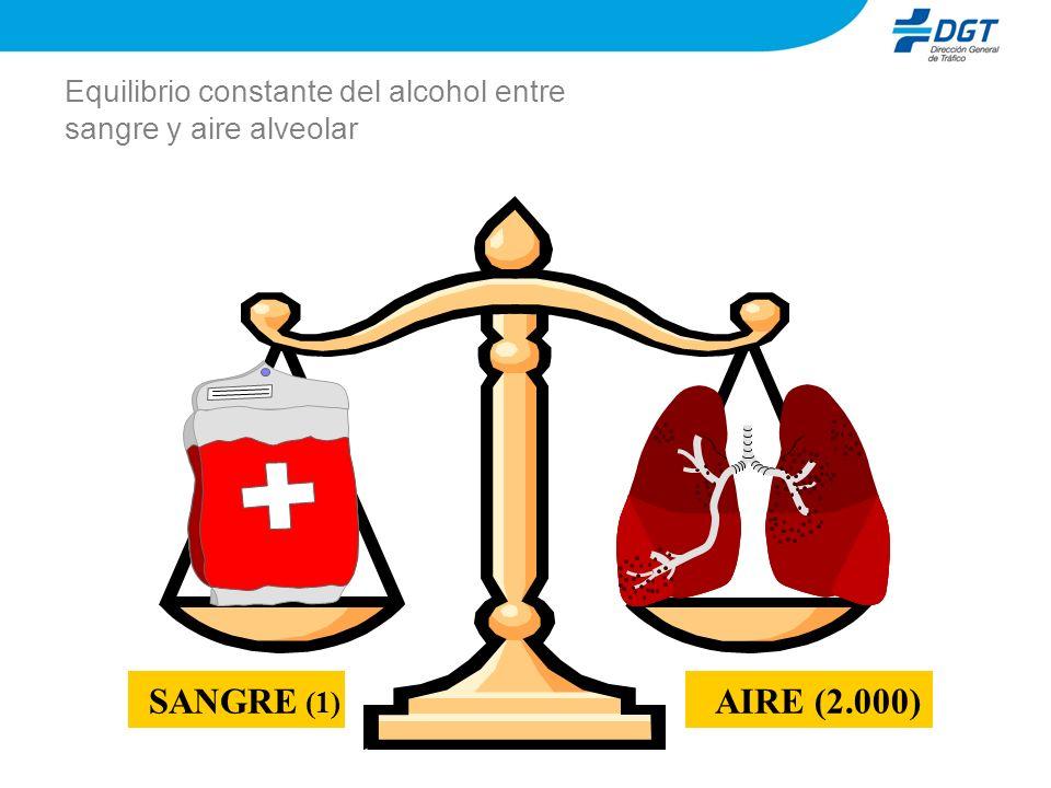 Equilibrio constante del alcohol entre sangre y aire alveolar