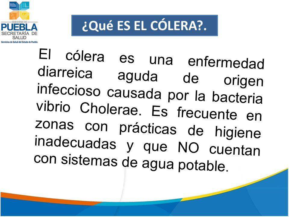 ¿Qué ES EL CÓLERA .