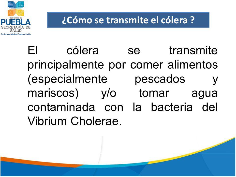 ¿Cómo se transmite el cólera