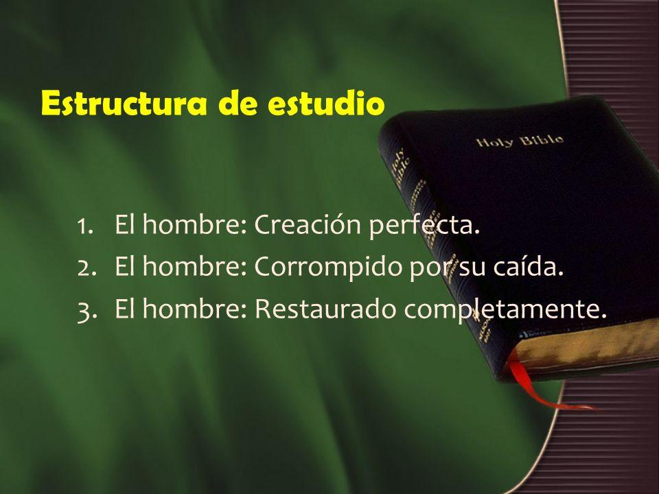 Estructura de estudio El hombre: Creación perfecta.