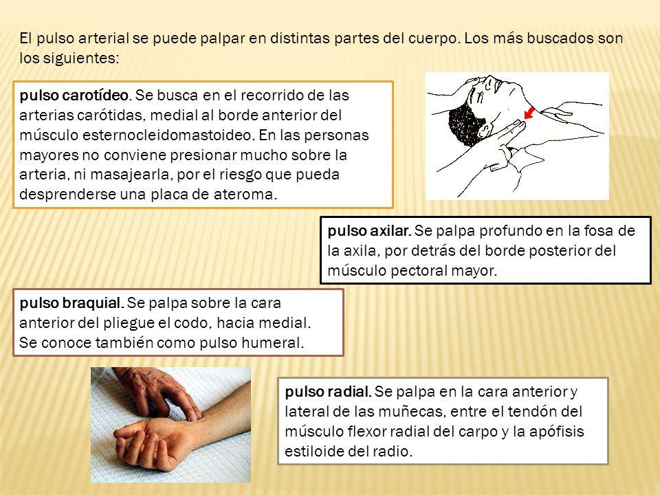 El pulso arterial se puede palpar en distintas partes del cuerpo