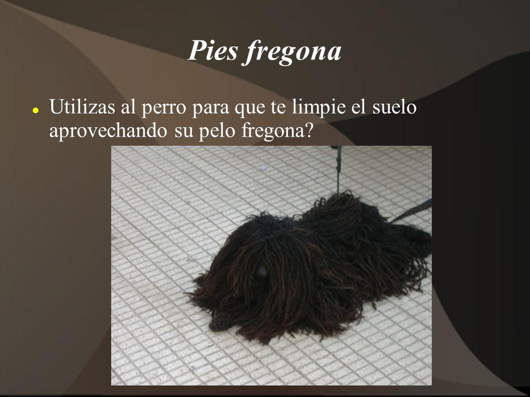 Pies fregona Utilizas al perro para que te limpie el suelo aprovechando su pelo fregona