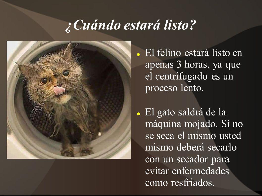 ¿Cuándo estará listo El felino estará listo en apenas 3 horas, ya que el centrifugado es un proceso lento.