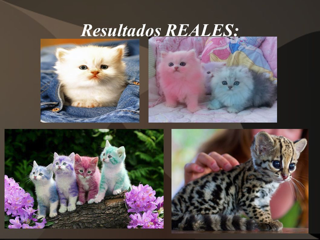 Resultados REALES: