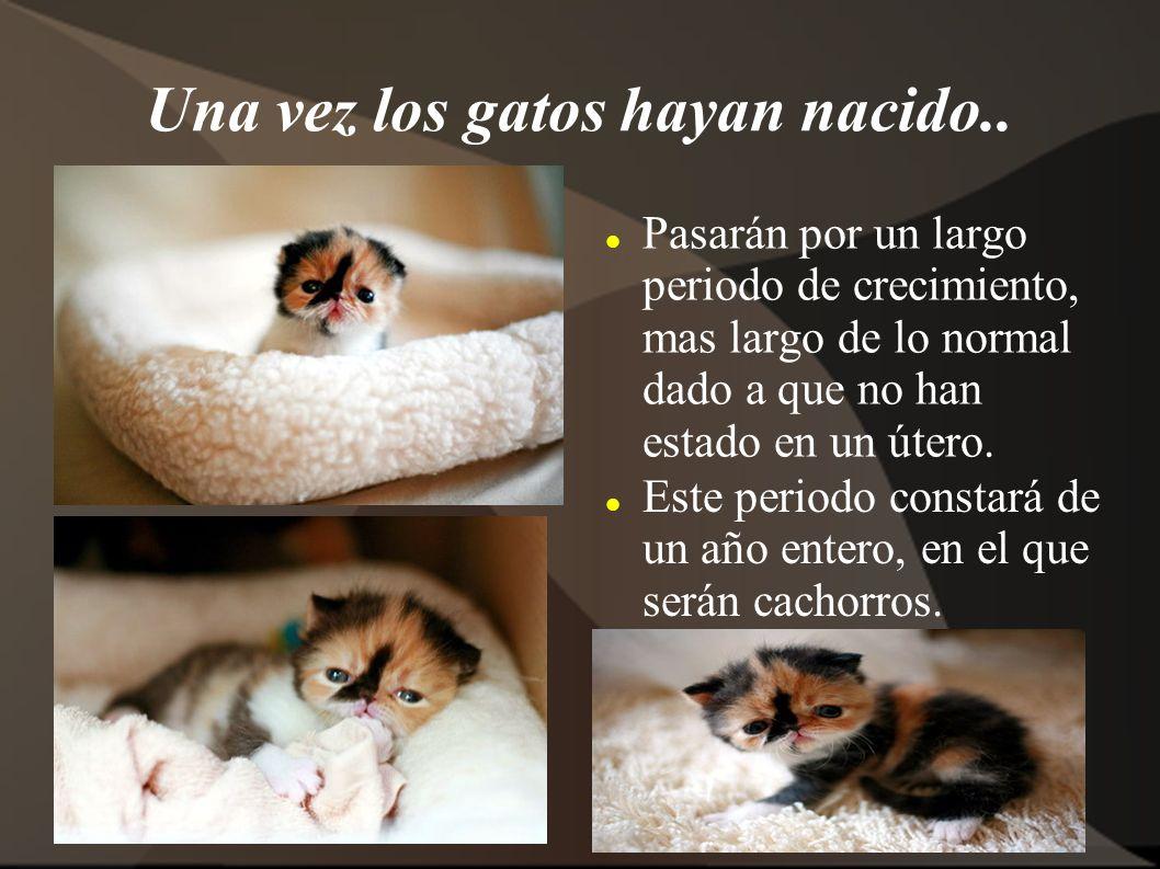 Una vez los gatos hayan nacido..