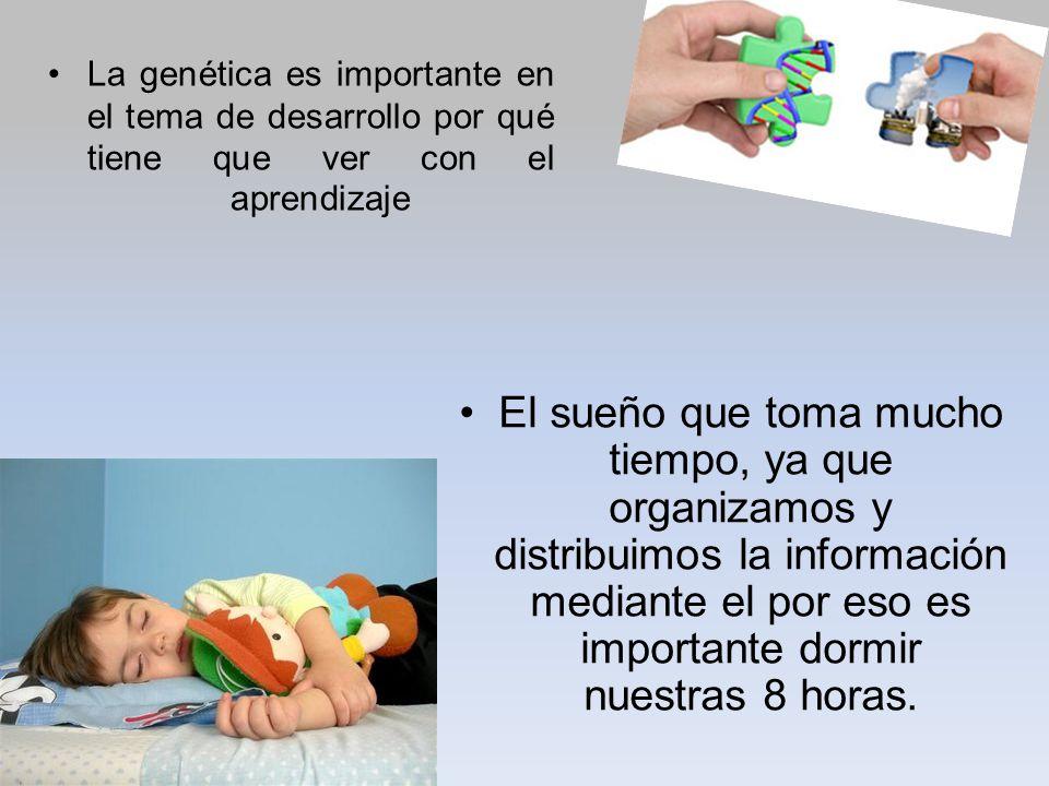 La genética es importante en el tema de desarrollo por qué tiene que ver con el aprendizaje
