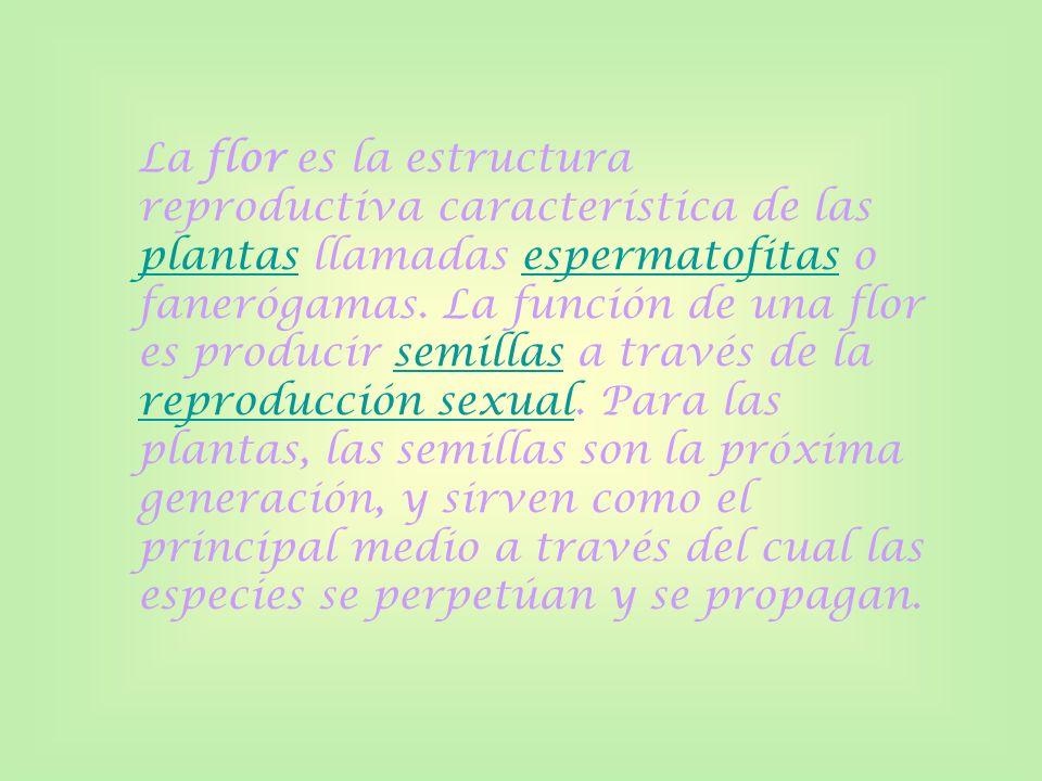 La flor es la estructura reproductiva característica de las plantas llamadas espermatofitas o fanerógamas.