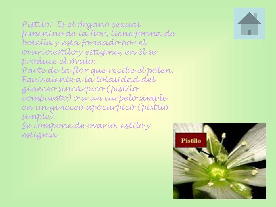 Pistilo: Es el órgano sexual femenino de la flor, tiene forma de botella y esta formado por el ovario,estilo y estigma, en él se produce el óvulo.