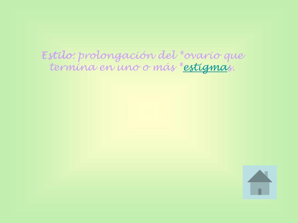 Estilo: prolongación del *ovario que termina en uno o más *estigmas.