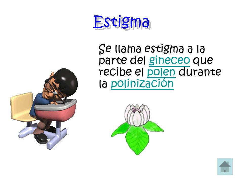 Estigma Se llama estigma a la parte del gineceo que recibe el polen durante la polinización