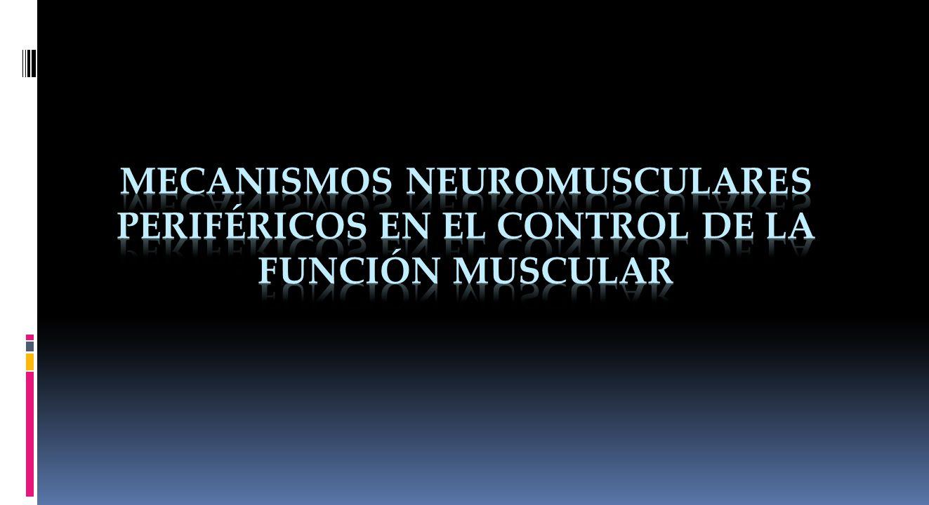 Mecanismos Neuromusculares periféricos en el control de la función muscular