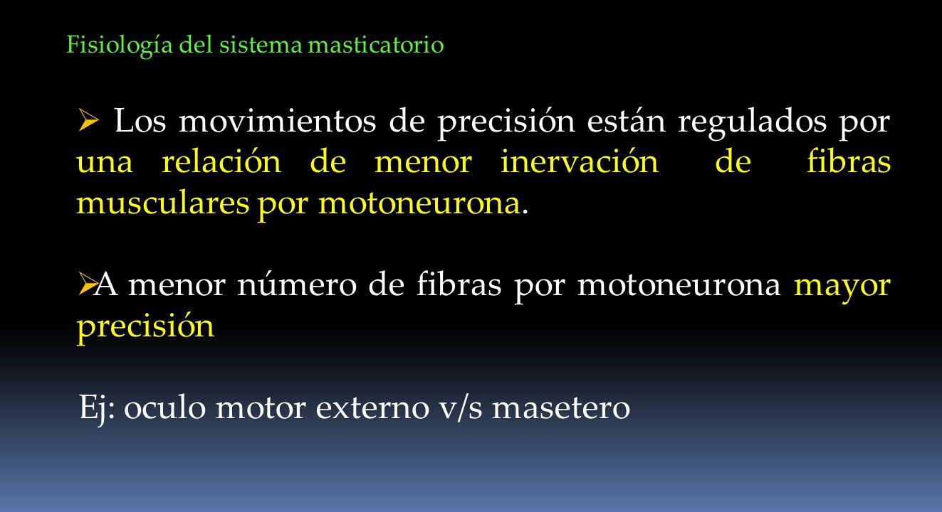 A menor número de fibras por motoneurona mayor precisión