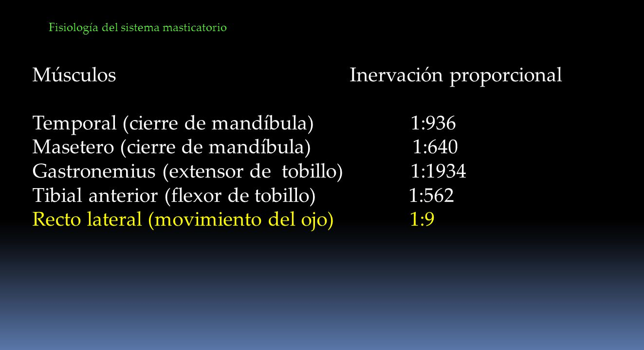 Músculos Inervación proporcional Temporal (cierre de mandíbula) 1:936