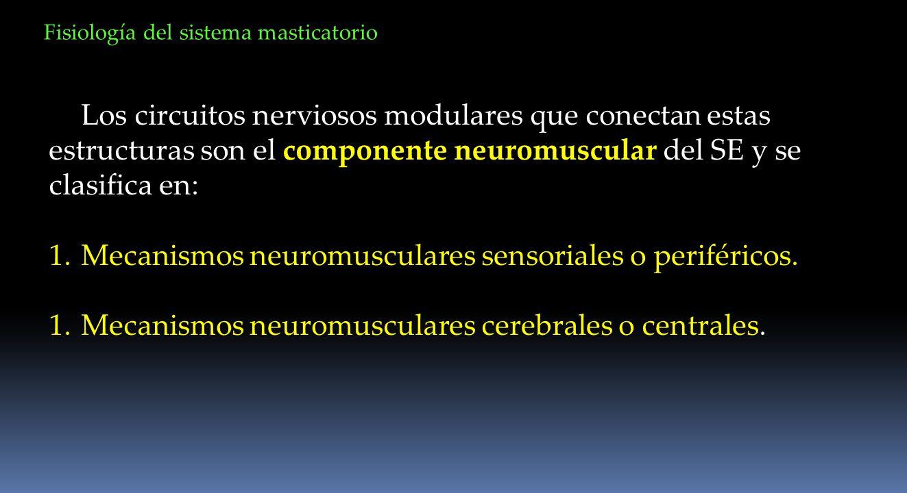 Mecanismos neuromusculares sensoriales o periféricos.