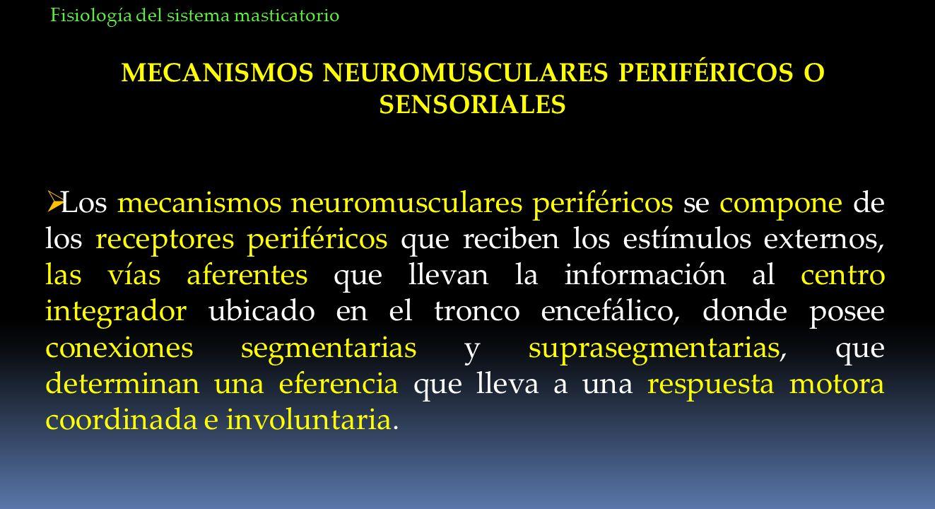 MECANISMOS NEUROMUSCULARES PERIFÉRICOS O SENSORIALES