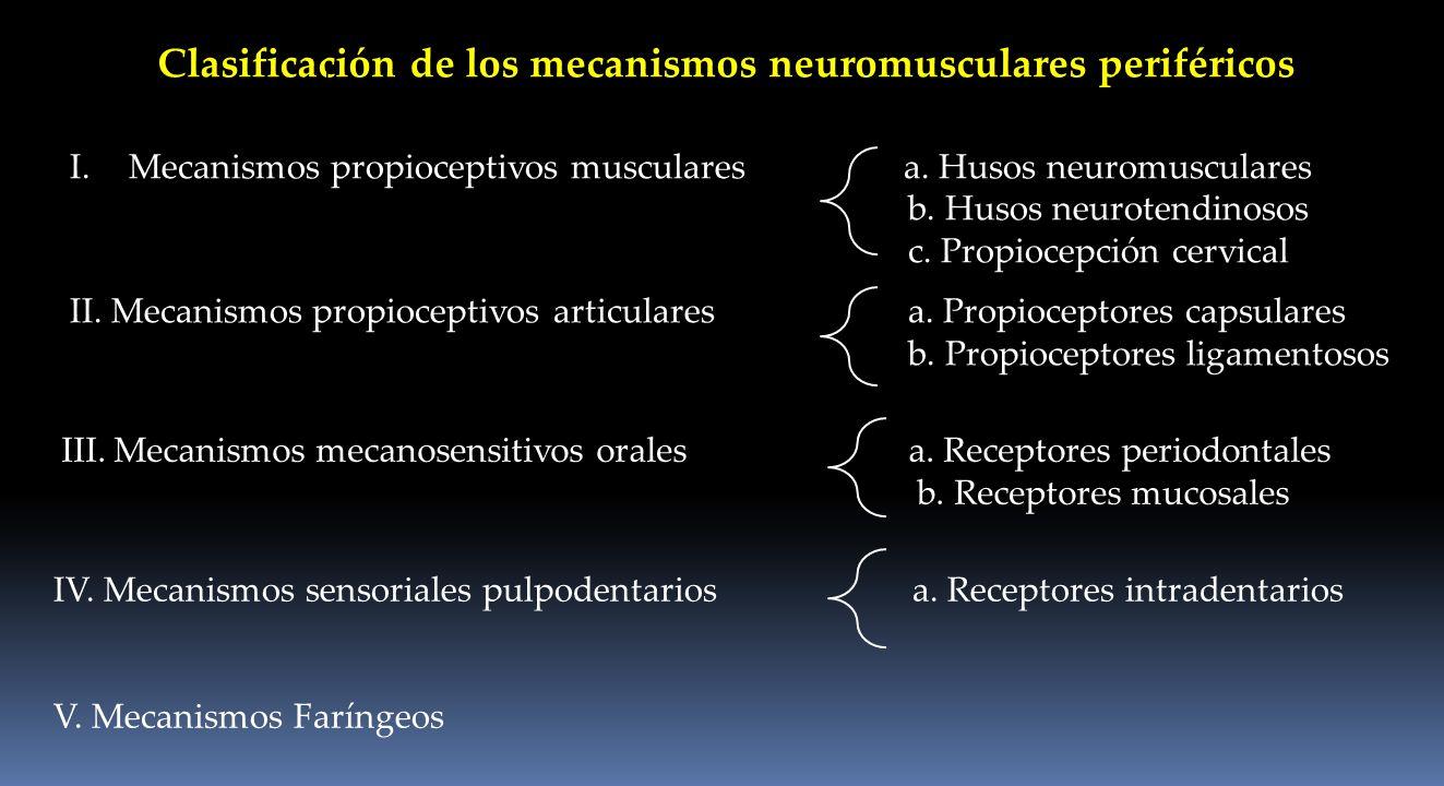 Clasificación de los mecanismos neuromusculares periféricos