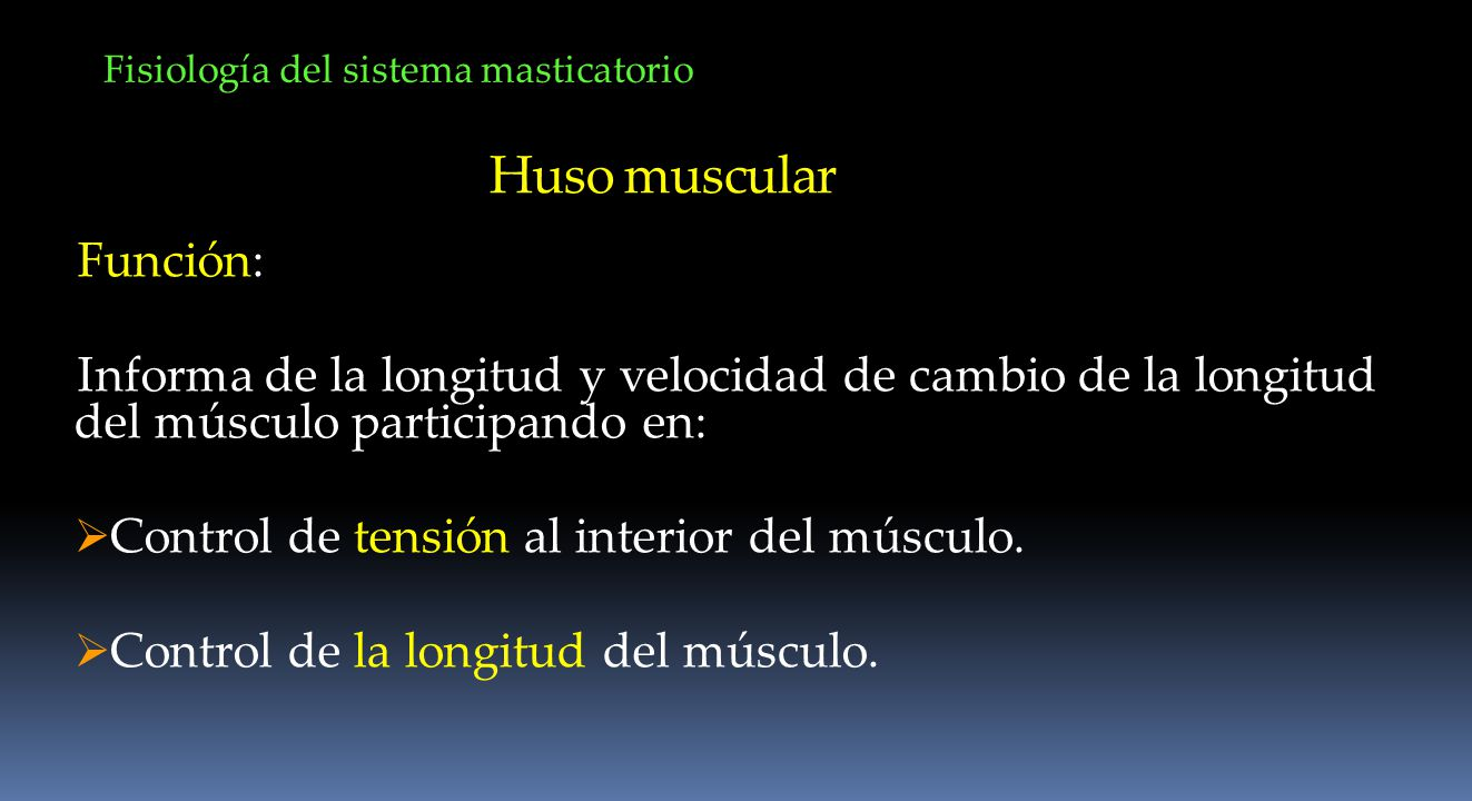 Huso muscular Función: