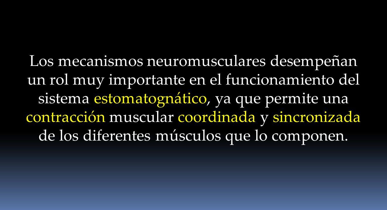 Los mecanismos neuromusculares desempeñan un rol muy importante en el funcionamiento del sistema estomatognático, ya que permite una contracción muscular coordinada y sincronizada de los diferentes músculos que lo componen.