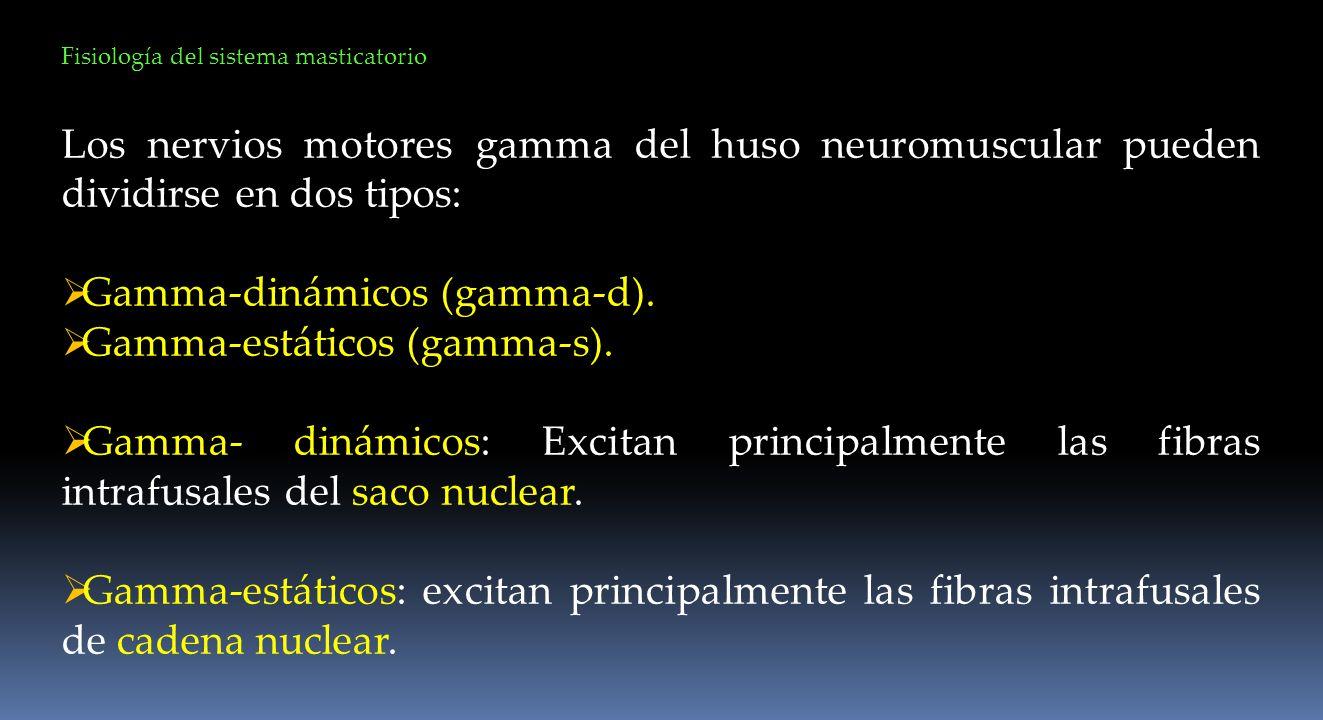 Gamma-dinámicos (gamma-d). Gamma-estáticos (gamma-s).