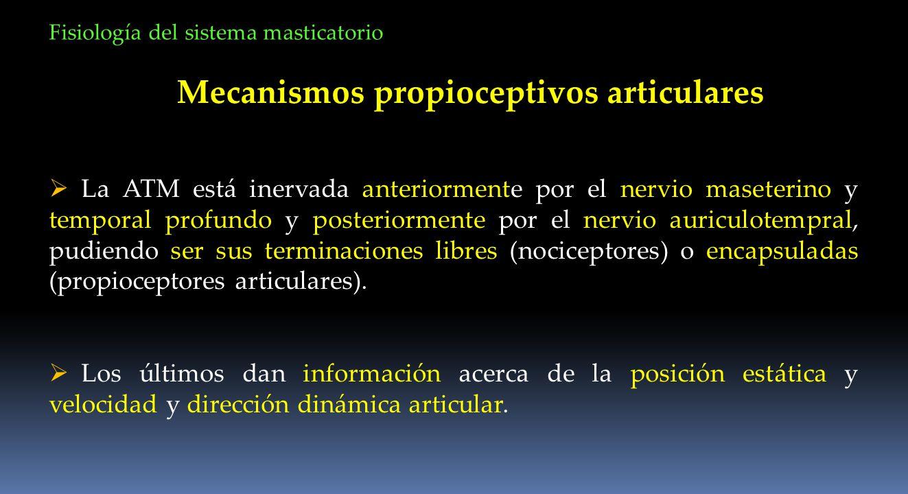 Mecanismos propioceptivos articulares
