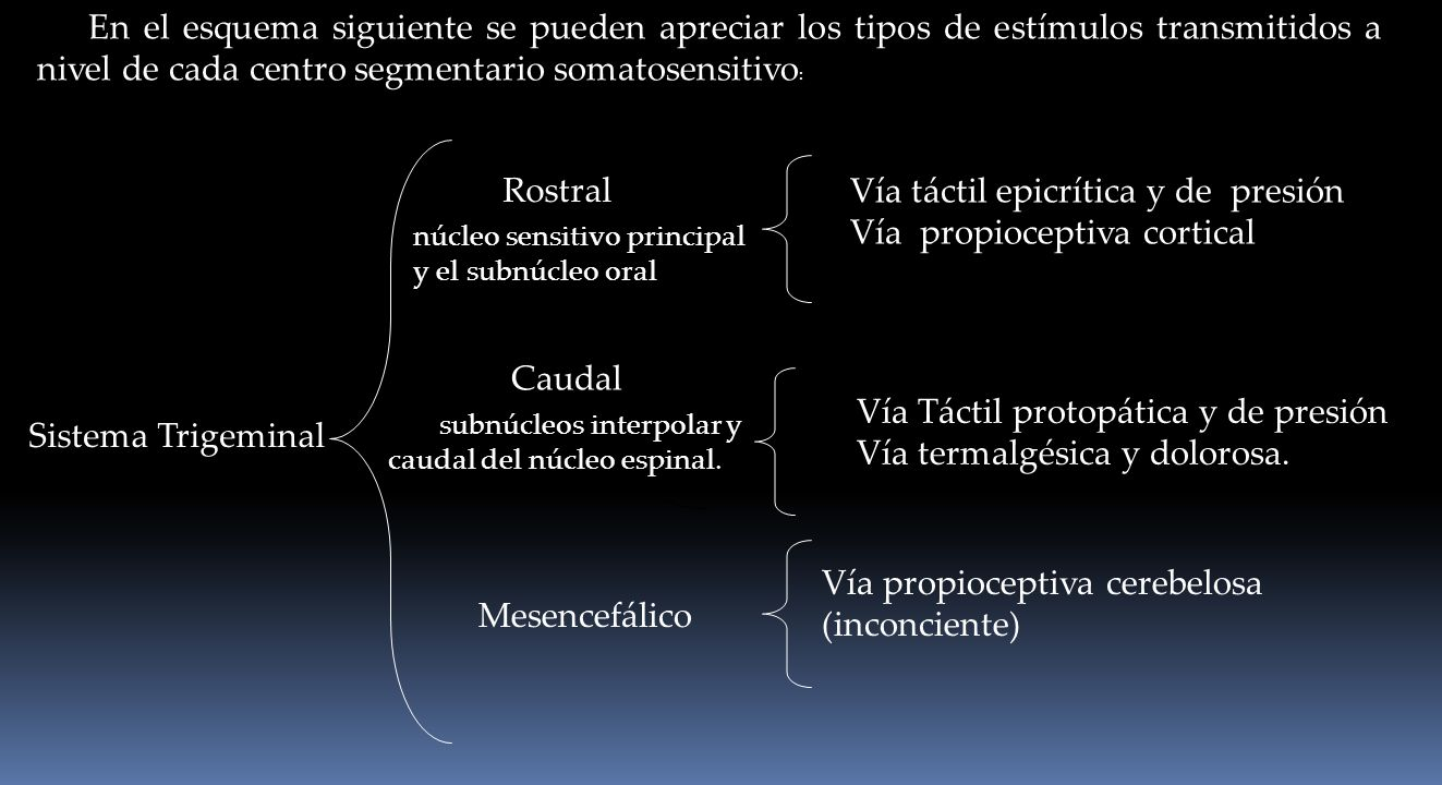 Vía táctil epicrítica y de presión Vía propioceptiva cortical