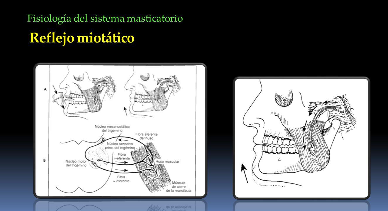 Fisiología del sistema masticatorio