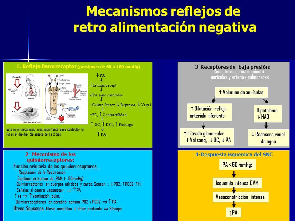 Mecanismos reflejos de retro alimentación negativa