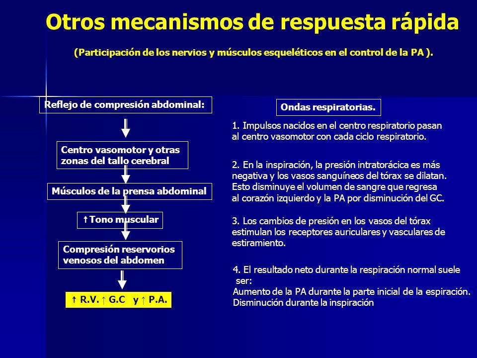 Otros mecanismos de respuesta rápida