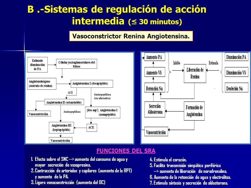 B .-Sistemas de regulación de acción intermedia (≤ 30 minutos)