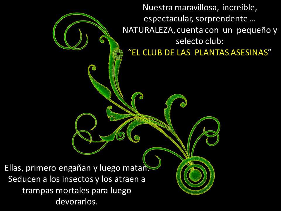 EL CLUB DE LAS PLANTAS ASESINAS