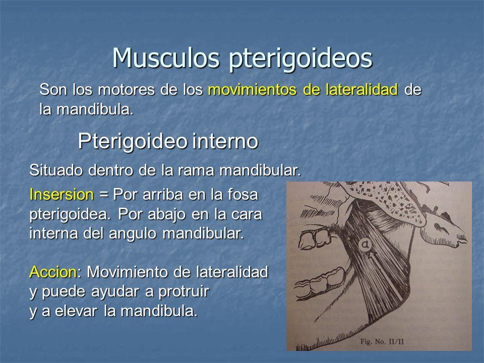 Musculos pterigoideos