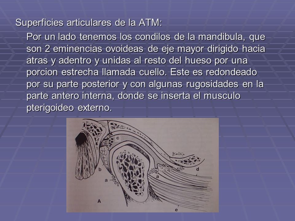 Superficies articulares de la ATM:
