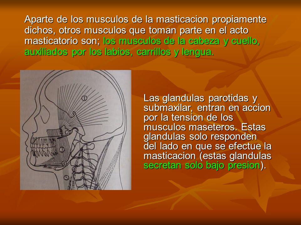 Aparte de los musculos de la masticacion propiamente dichos, otros musculos que toman parte en el acto masticatorio son; los musculos de la cabeza y cuello, auxiliados por los labios, carrillos y lengua.