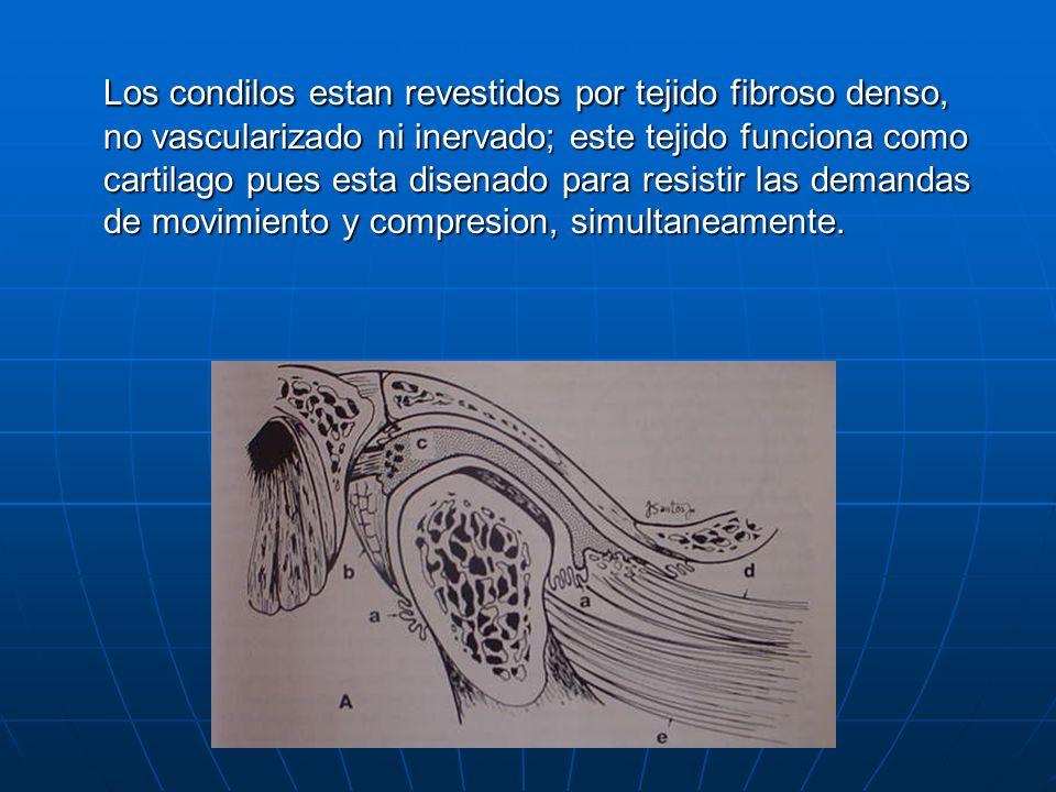Los condilos estan revestidos por tejido fibroso denso, no vascularizado ni inervado; este tejido funciona como cartilago pues esta disenado para resistir las demandas de movimiento y compresion, simultaneamente.