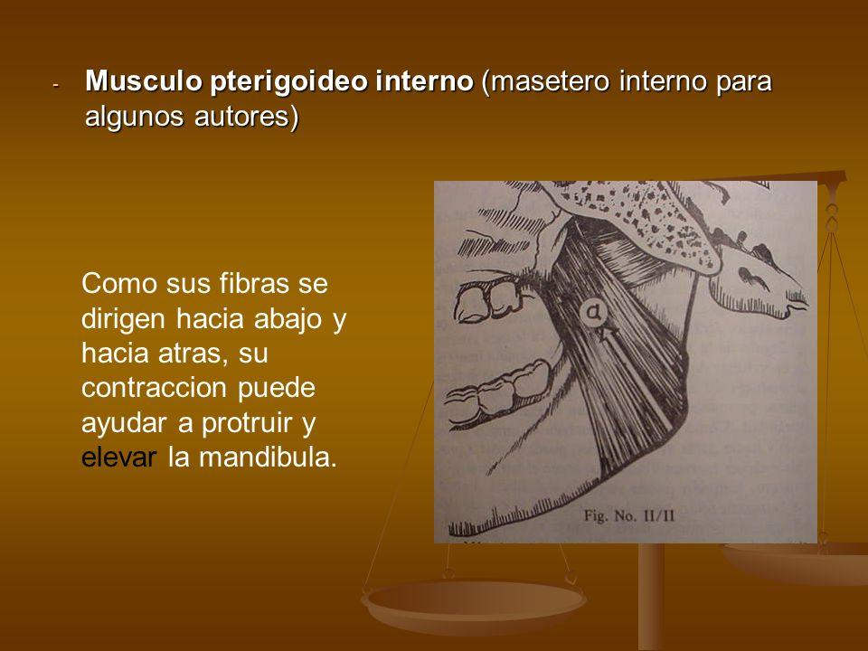 Musculo pterigoideo interno (masetero interno para algunos autores)