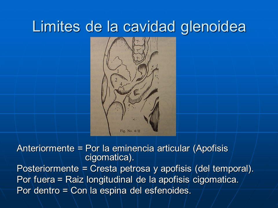 Limites de la cavidad glenoidea