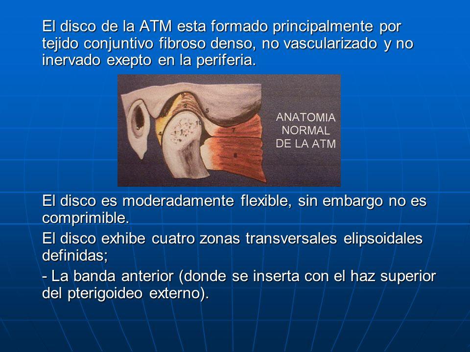 El disco de la ATM esta formado principalmente por tejido conjuntivo fibroso denso, no vascularizado y no inervado exepto en la periferia.